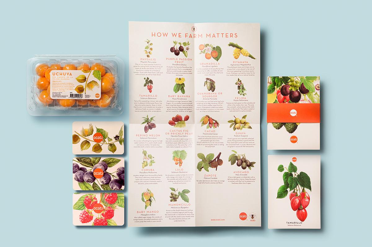 Ocati水果包装设计 欣赏-第1张