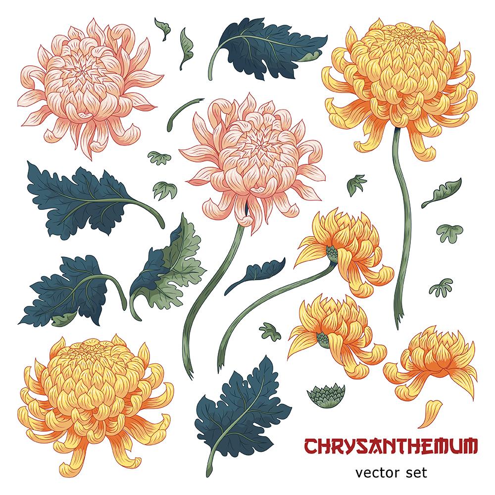 20张古典中国风手绘菊花矢量背景 元素-第1张