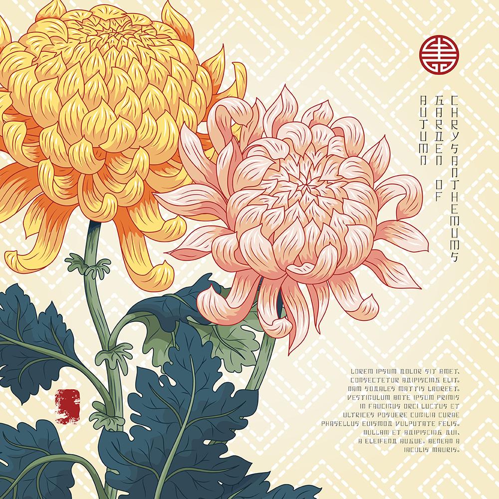 20张古典中国风手绘菊花矢量背景 元素-第11张