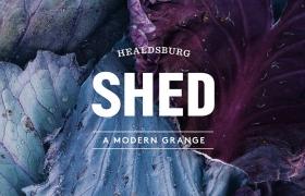 SHED品牌更新