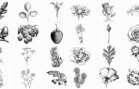 114张铜版画植物蔬菜水果线稿png