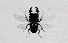 20个昆虫矢量插图集